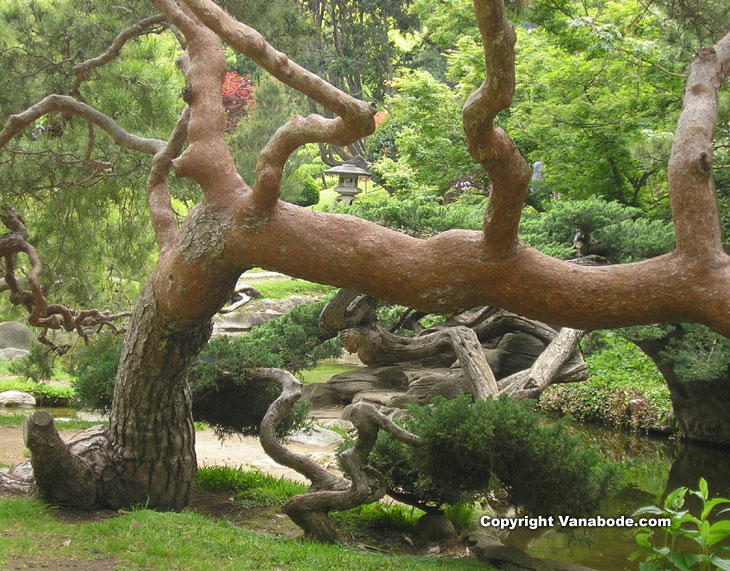 walking though the gardens at Huntington Library California picture