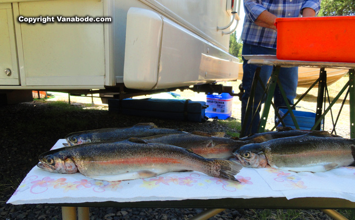 Idaho Horsethief resevoir trout for books