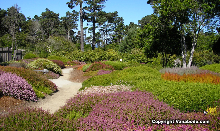 mendocino coast heather garden picture