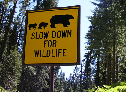 picture of bear sign in sequoia national park