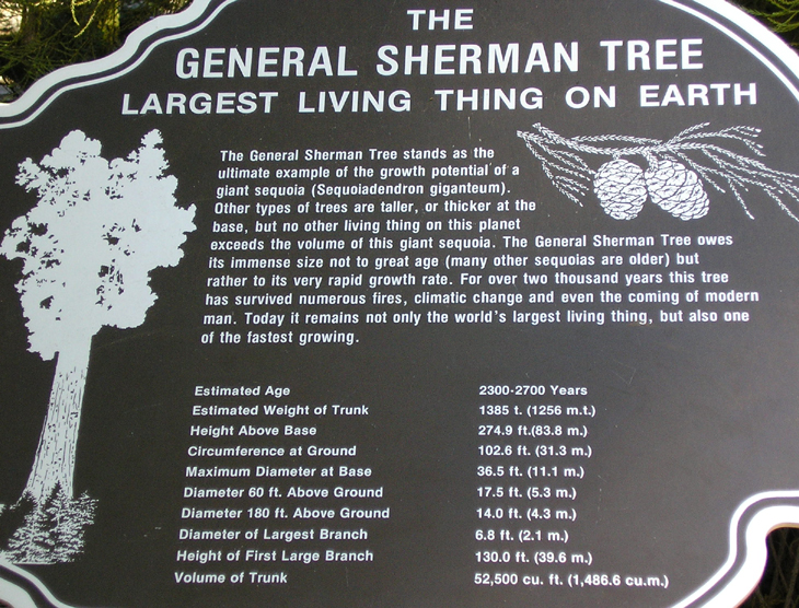 picture of information on general sherman tree