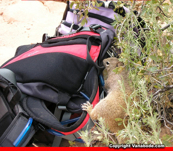zion squirrel on backpack picture